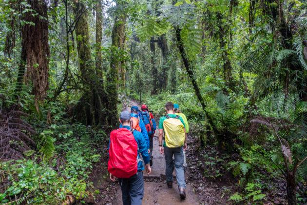 Vom Machame Gate geht es zunächst durch den Dschungel