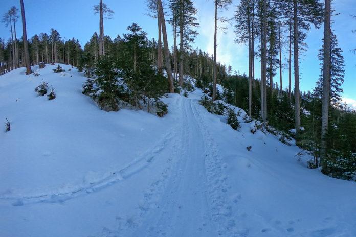 Skitour durch den Wald auf den Graukogel